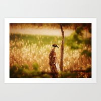 Bird Photography Art Print