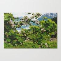 Norwegian Cherry Blossom… Canvas Print