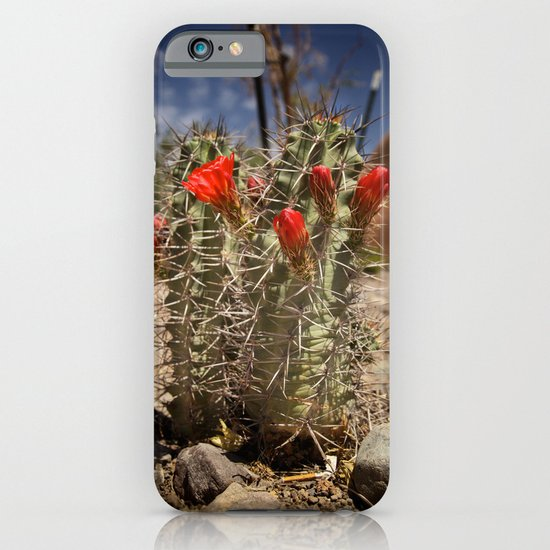 Prickly Beauty iPhone & iPod Case