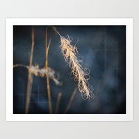 Evening Grass Art Print