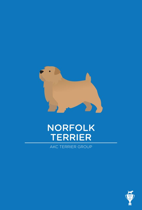 Norfolk Terrier Art Print