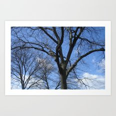 After Winter Trees Art Print