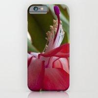 Christmas Cactus iPhone 6 Slim Case