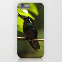 Hummingbird on a branch iPhone 6 Slim Case