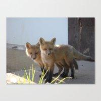 Fox XIV Canvas Print