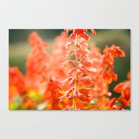 Basking in the Sun Canvas Print