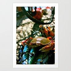 Crab Art Print