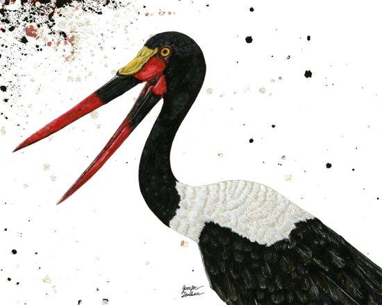 Saddle-billed Stork Quinn Art Print