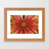 Helenium Flower Framed Art Print