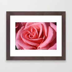 Rose with dewdrops Framed Art Print