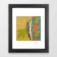 Brown Creeper Framed Art Print