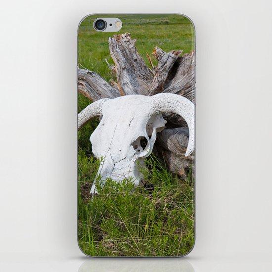 Buffalo skull iPhone & iPod Skin