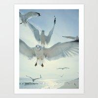 Seagulls {Five} Art Print