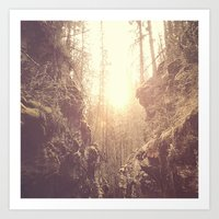 Forgotten Forest Art Print