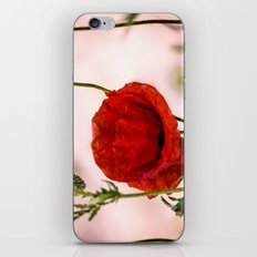Red poppy iPhone & iPod Skin