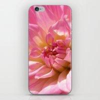 PINK DAHLIA CROWN IX iPhone & iPod Skin