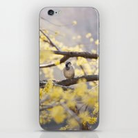 Spring Bird iPhone & iPod Skin