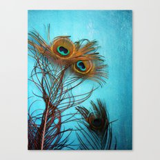 3 peacock feathers Canvas Print