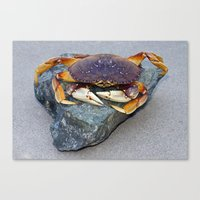 Crab On A Rock Canvas Print