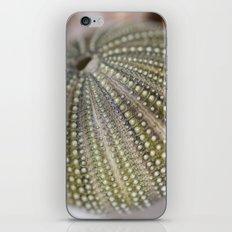 Urchin Texture iPhone & iPod Skin