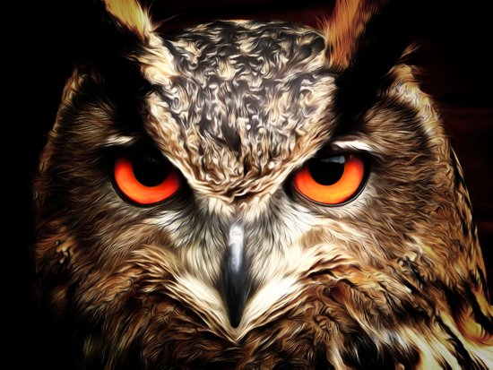 Whoo Are You Looking At? Art Print