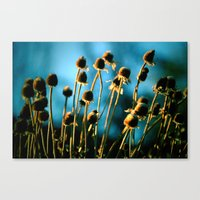 Light Of The Sun Canvas Print