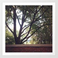 Summer At Ohio Universit… Art Print