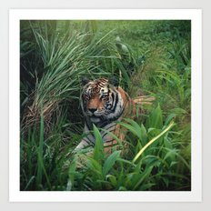 Everyone runs from Sher Khan Art Print