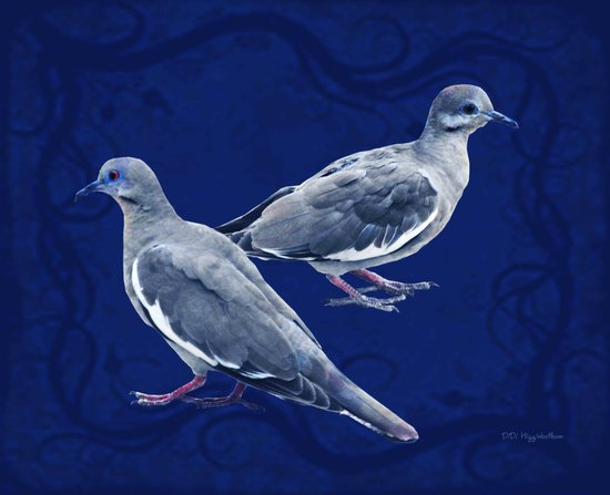 Doves on Blue Canvas Print