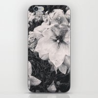 Enraptured iPhone & iPod Skin