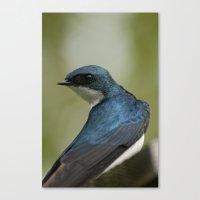 Tree Swallow - Ottawa, O… Canvas Print