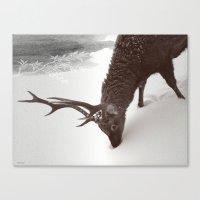 tender creature  Canvas Print