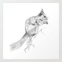 Red Squirrel Art Print