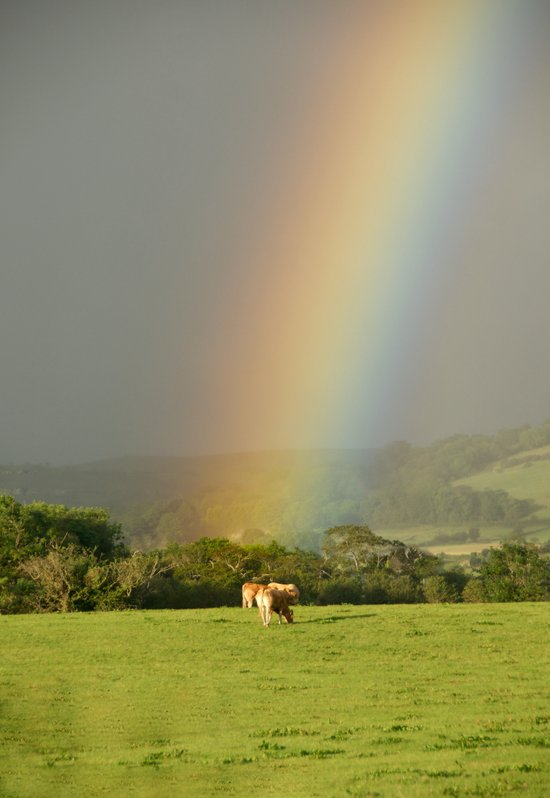 A Rainbow in Ireland Art Print