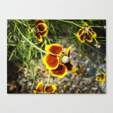Red For Apple And Yellow For Lemon Canvas Print