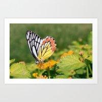Butterfly (2) Art Print