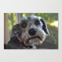 Bella Canvas Print