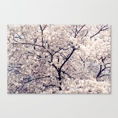 Cherry Blossom * Canvas Print