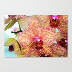 Explosion of Orchids Canvas Print