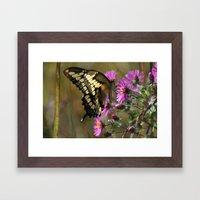 Giant Swallowtail (Papilio cresphontes) Framed Art Print