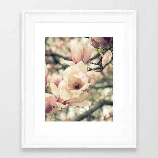 Magnolia Tree Bloom.  Flower Photography Framed Art Print