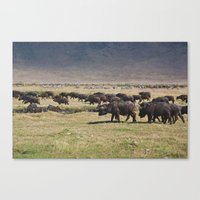 Ngorongoro Canvas Print