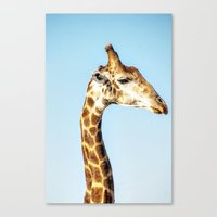 Portrait Of A Giraffe Canvas Print