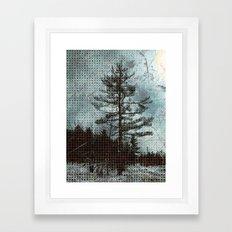 Old Pine Tree Framed Art Print