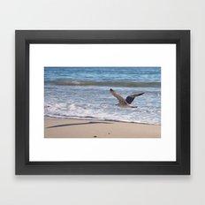 Fly Away Gull 6956 Framed Art Print