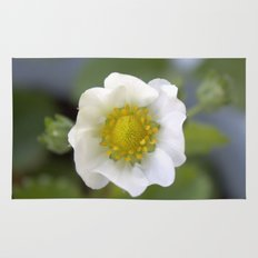 white strawberry flower. floral photo art. Rug