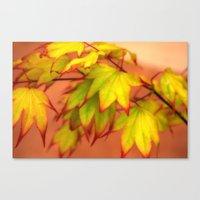 Tinged With Red Canvas Print