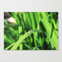 Canvas Print featuring Morning Rain in Deutschland by California English