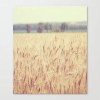 Wheatfield Canvas Print