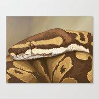 Ball Python (Odysseus) Canvas Print